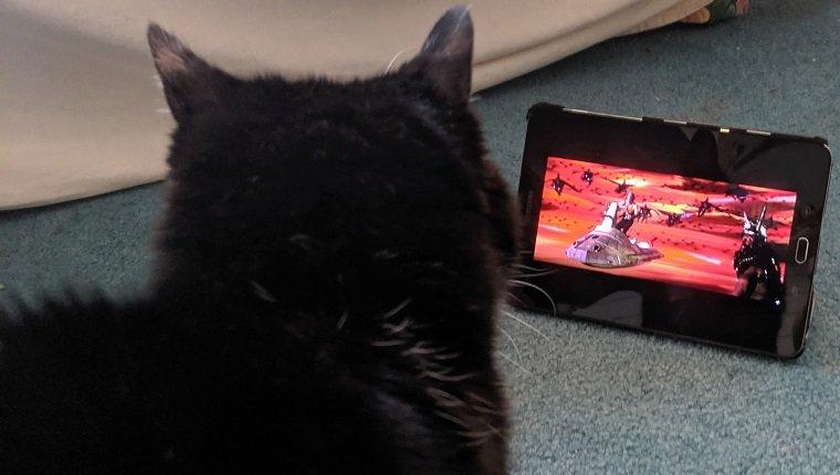 cat watching flash gordon
