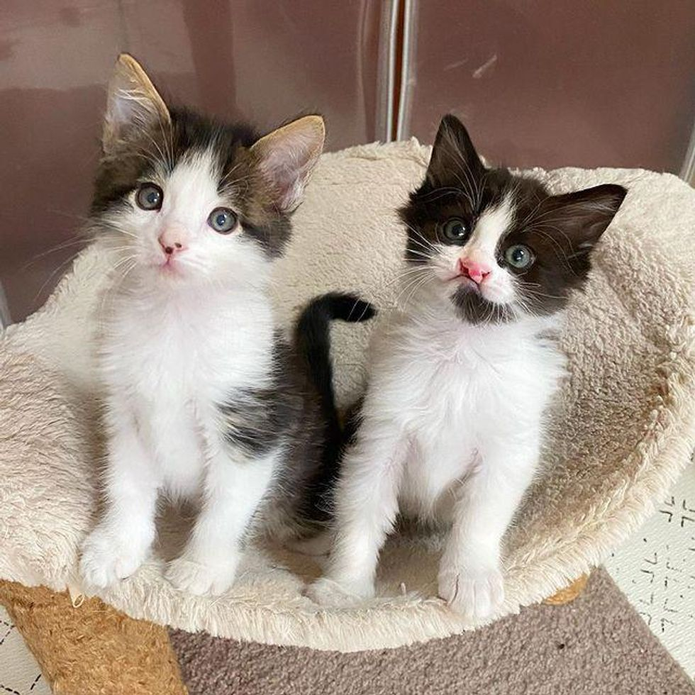 kitten cleft lip, blind kitten