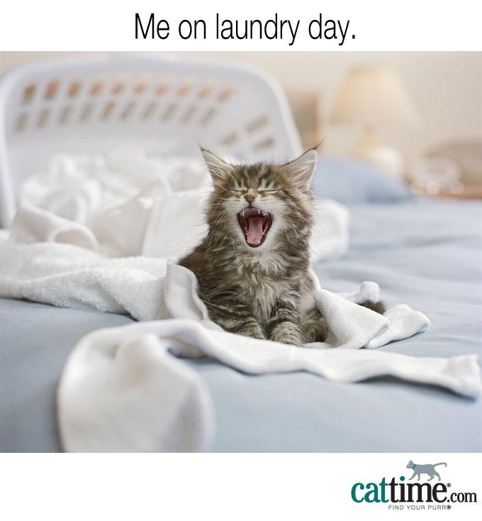 No More Laundry