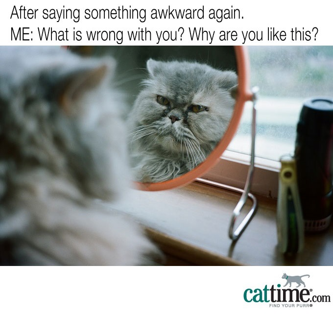 The Cat In The Mirror
