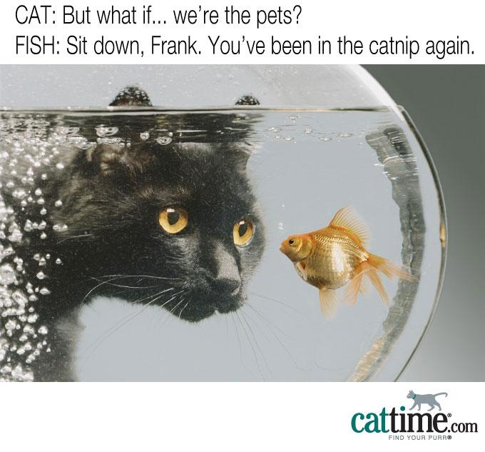 Who Pets Who?