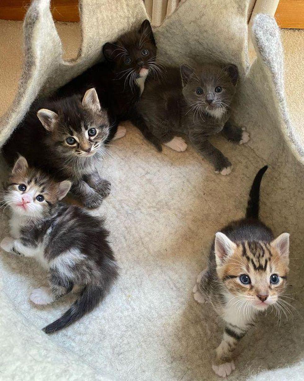 litter of kittens