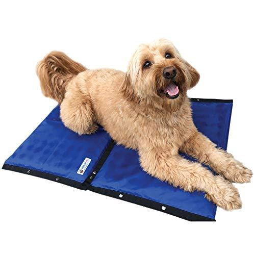 dog on blue cooling pad
