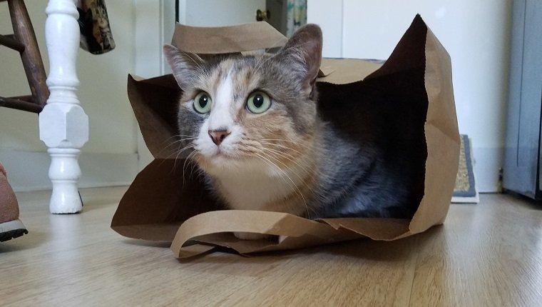 A calico cat in a paper shopping bag.