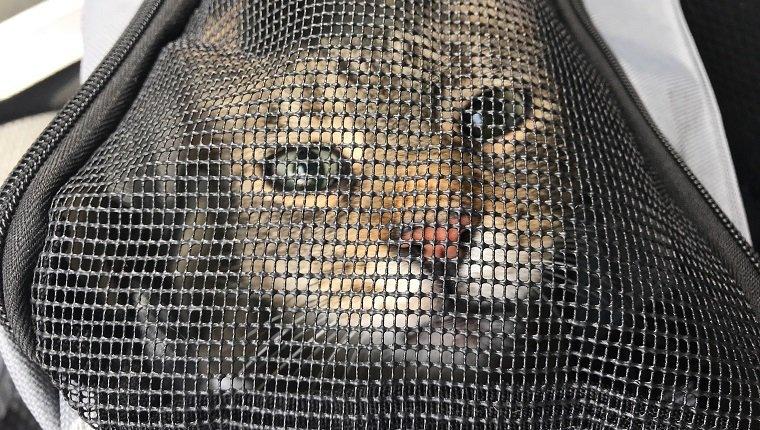 A New Pet Carrier