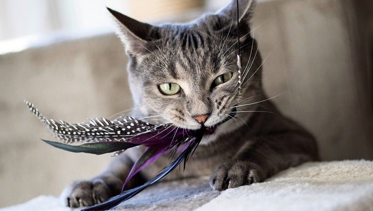 Active Play Cat Toys For Bonding