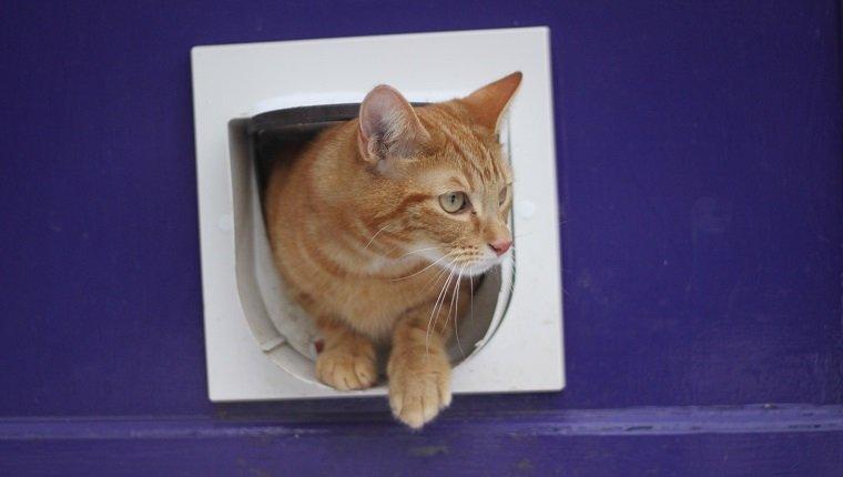 A Cat Door