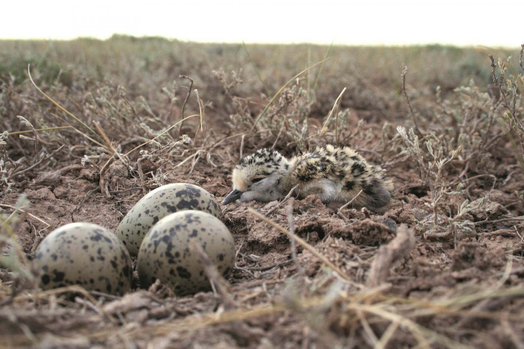 Locating and monitoring nests was vital to help understand breeding success © Rob Sheldon