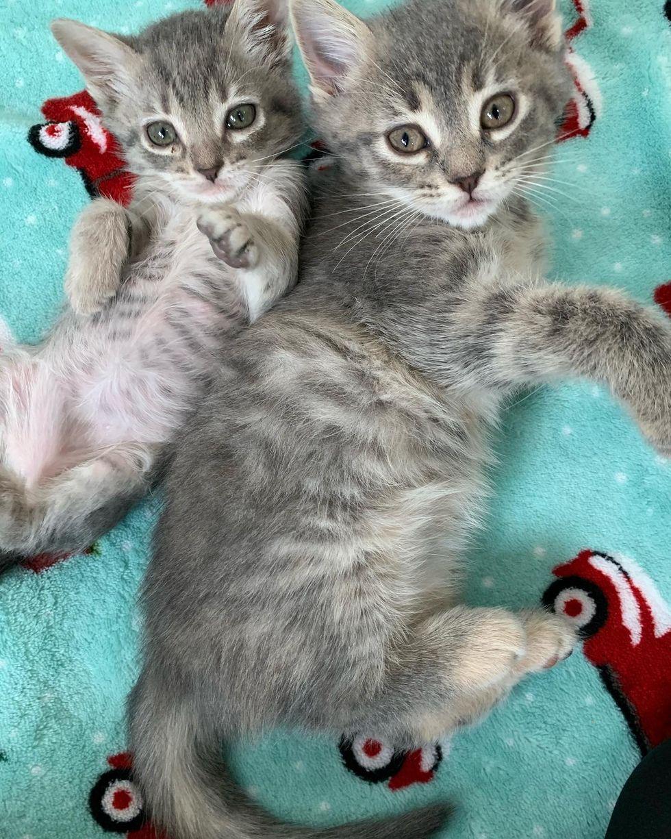 kitten half the size