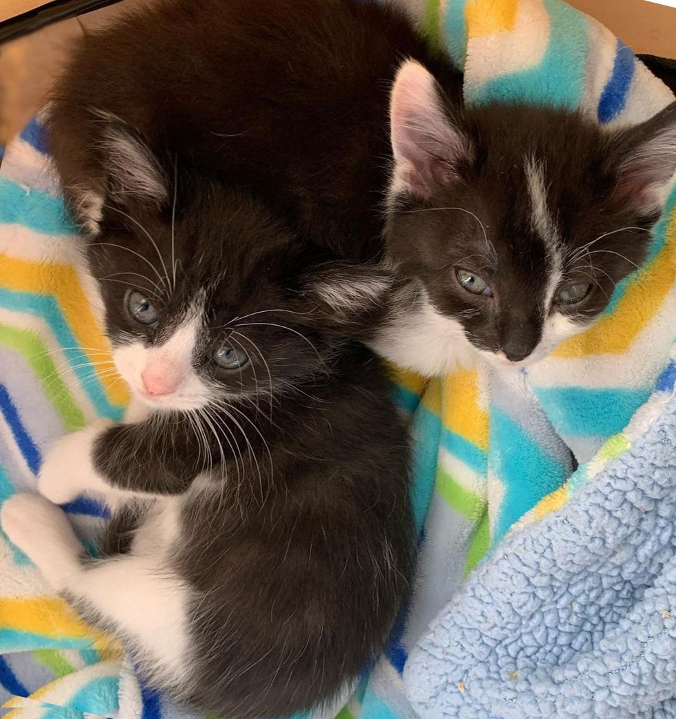 tuxedo kittens friends