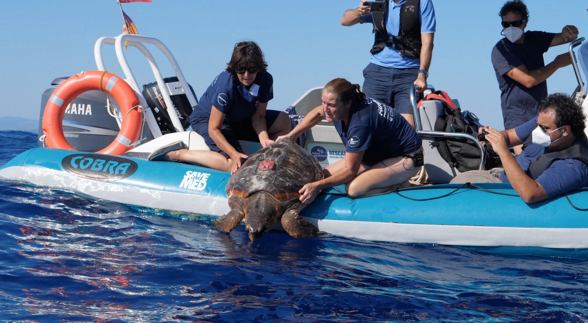 Thunderbird was fitted with a satellite tag and release after being recovered © Save the Med Foundation