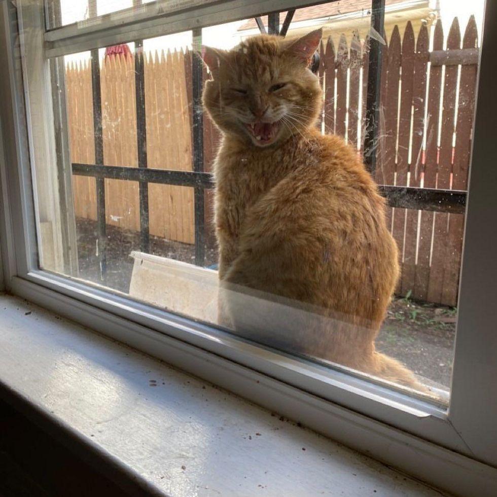 stray orange cat