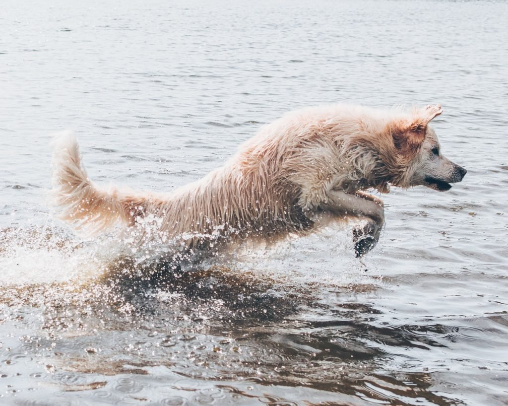 dog days of summer guide water fun and safety section dog jumping in water