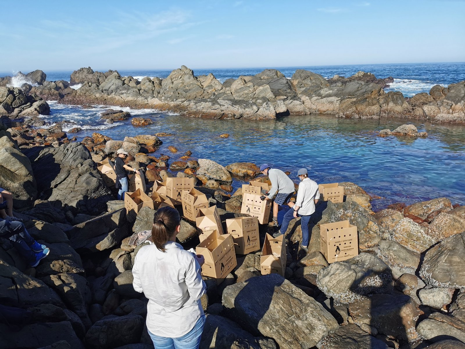 The penguins were carried closer to the sea in boxes © David Roberts/SANCCOB