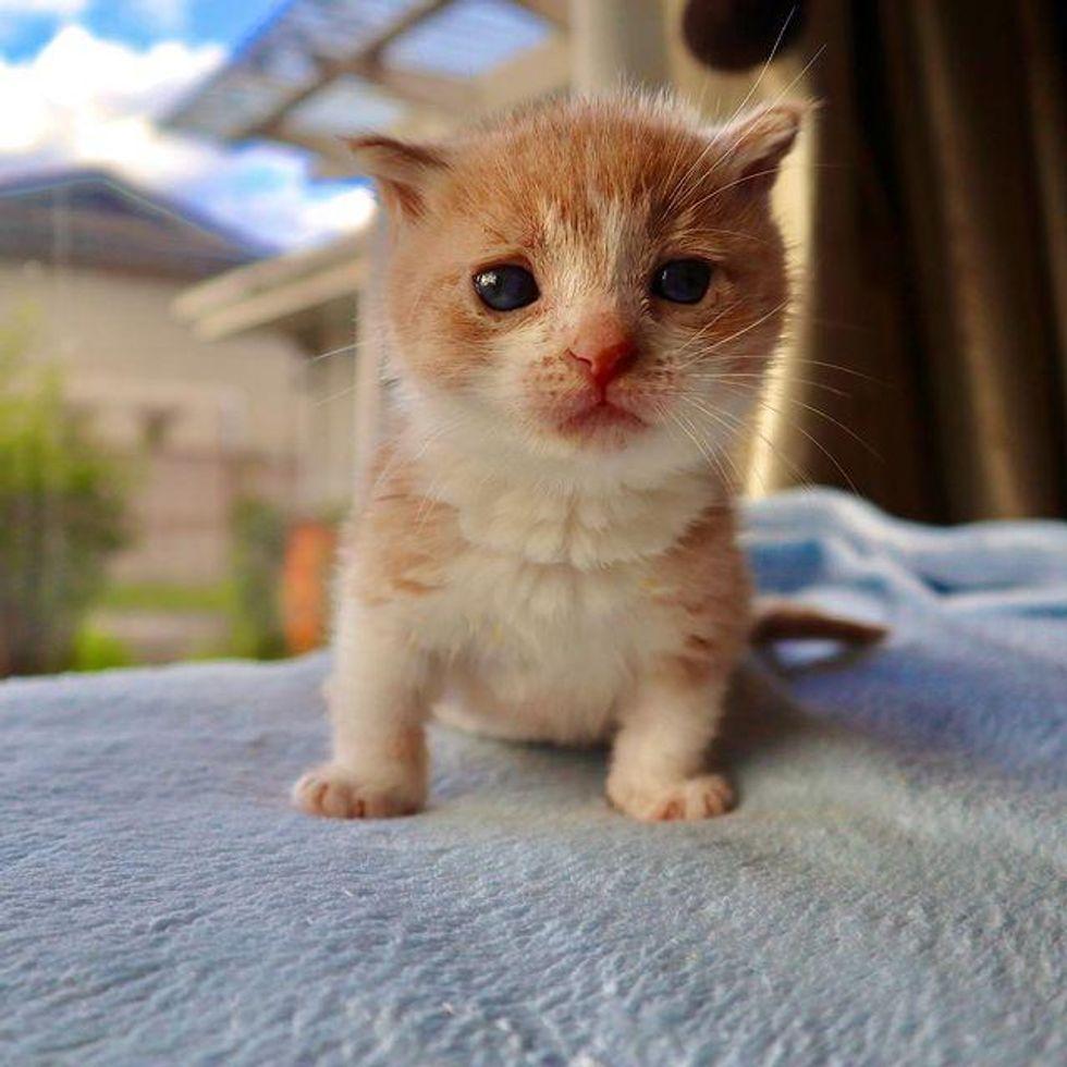 nugget the kitten