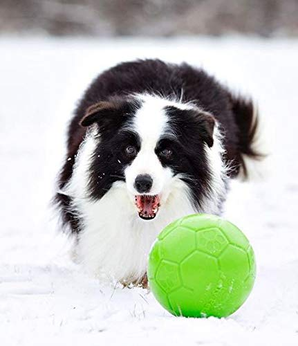 Dog playing with Jolly Pets green soccer ball