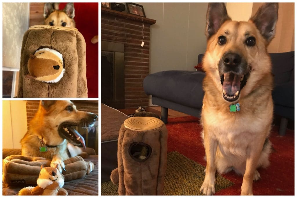 German Shepherd playing with chipmunk puzzle toy