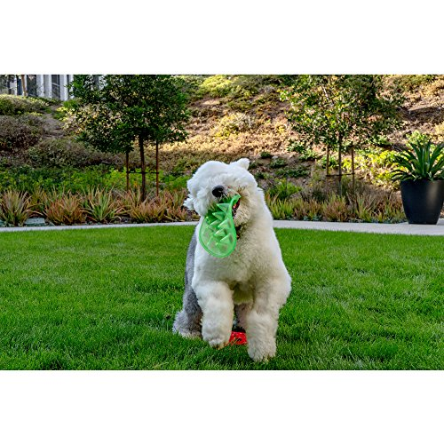 dog on grass holding green Floppy Spike Soft Dog Frisbee in its mouth