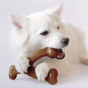 dog laying down chewing Benebone Bacon Flavor Wishbone Chew Toy