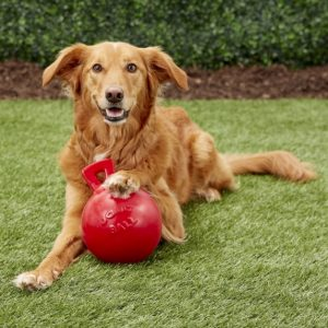 Dog laying down in grass with paw on top of red Jolly Pets Tug-n-Toss ball dog toy