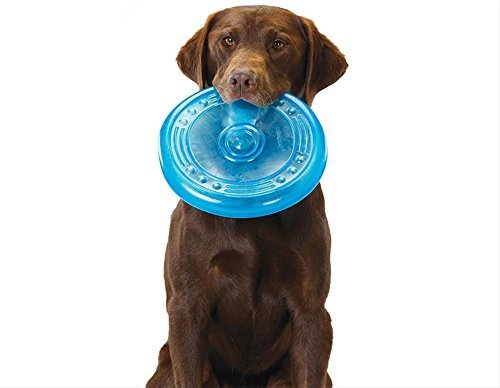 brown dog sitting holding Petstages Orka Flyer blue translucent frisbee in mouth