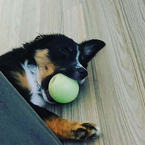 dog lying on floor holding Chew King Fetch Ball in its mouth