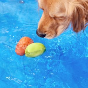 dog looking down at two Kurgo Skipping Stones in water, one bright orange, one bright green