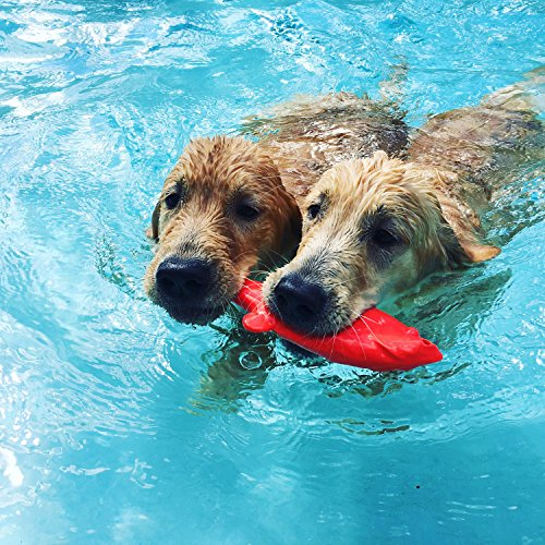 two dogs swimming together, both holding red Flying Fish Floating Dog Toy in mouths