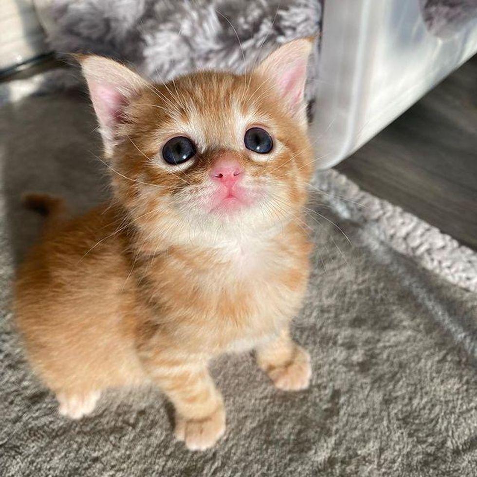 ginger kitten with big eyes