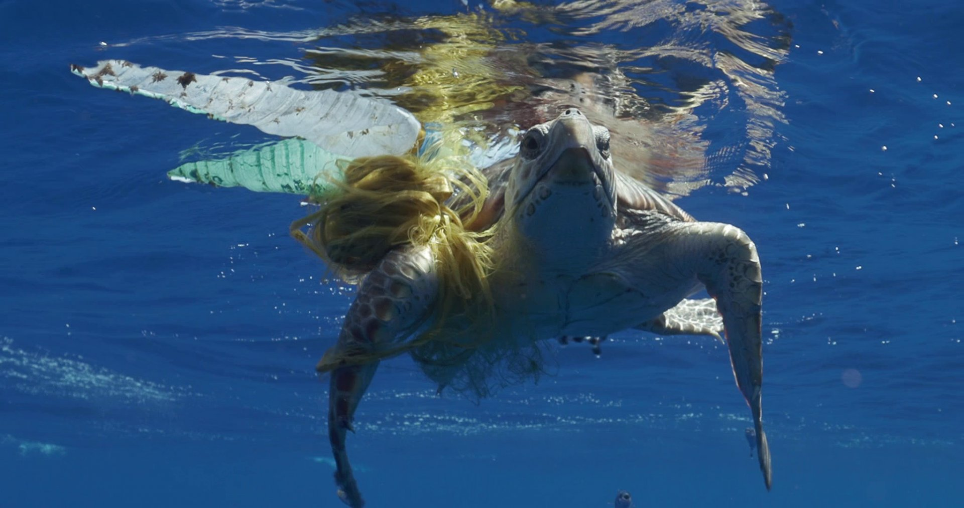 Thunderbird was found entangled by abandoned fishing gear in the Mediterranean © Save the Med Foundation
