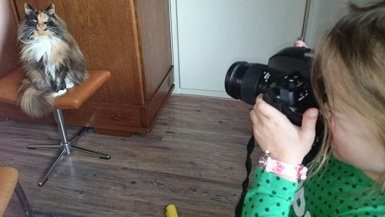 Girl Photographing Cat At Home