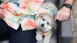 Dog Hawaiian Shirts Dog Threads Apres BBQ matching dog and family Hawaiian shirt