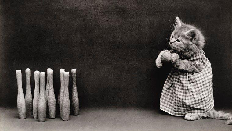 Bowling Cat