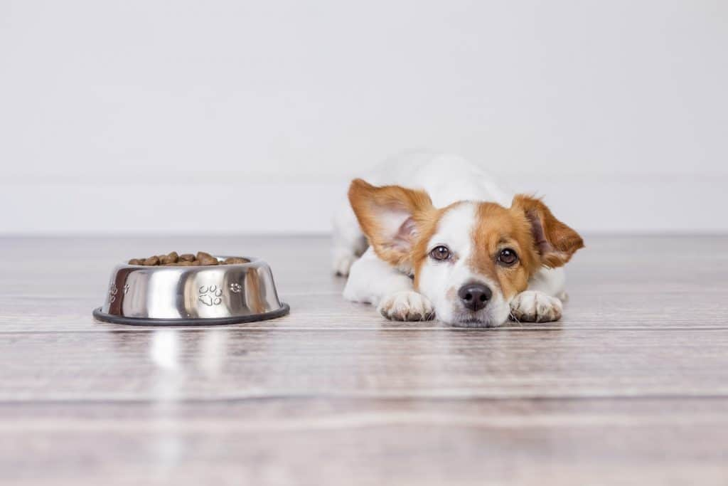 puppy laying next to his food bowl looking at the camera