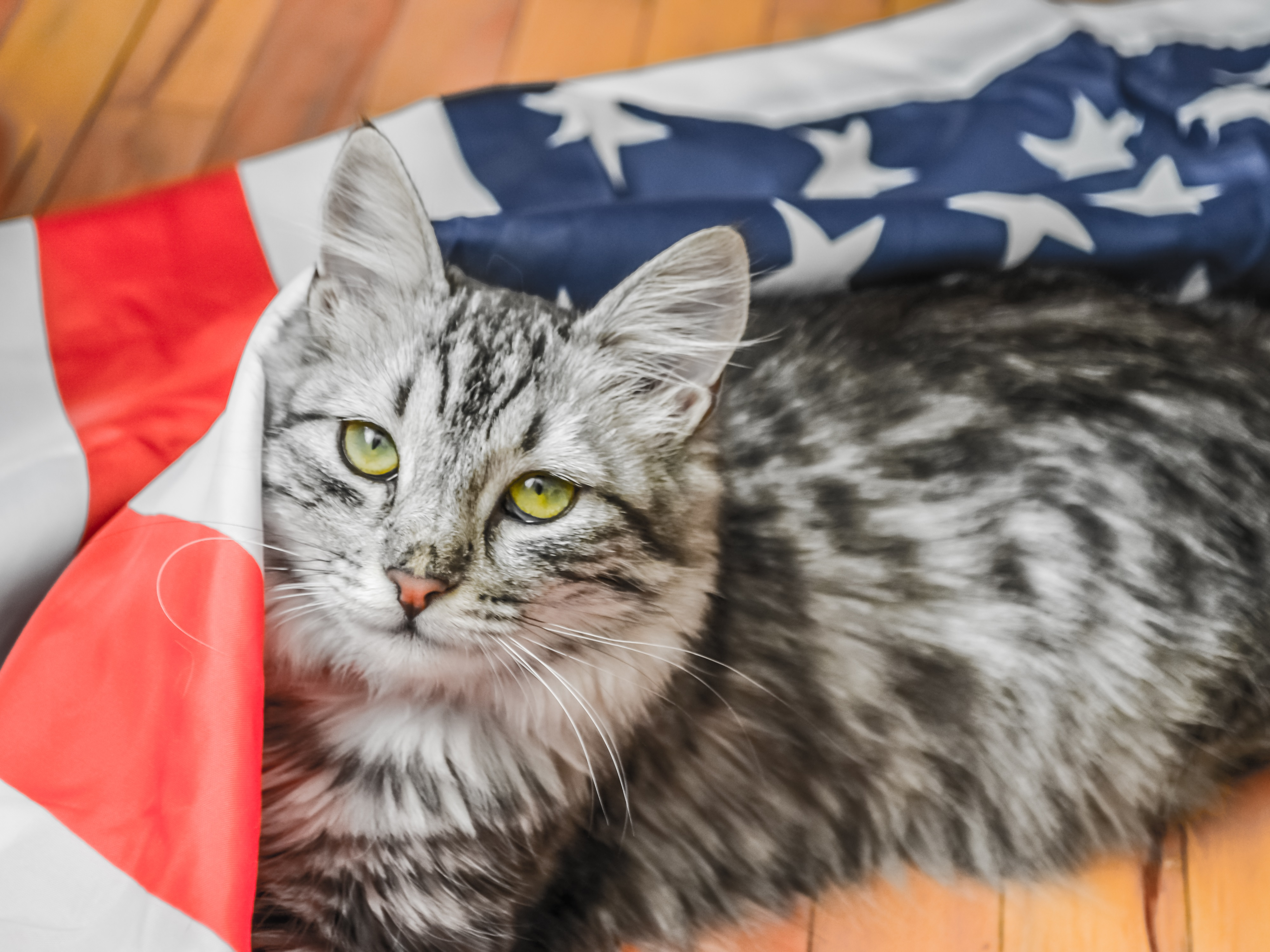 Wrapped In A Blanket Of Patriotism