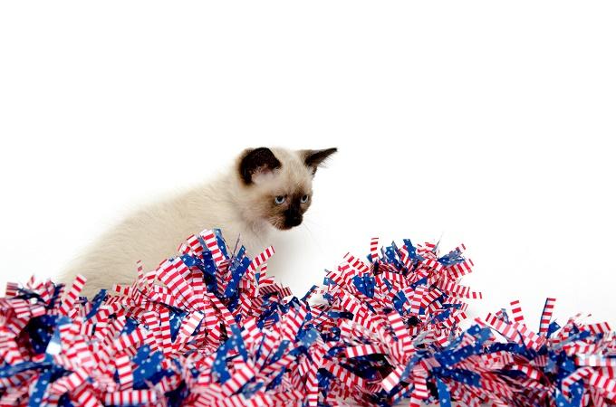 Where Did I Hide The Catnip?