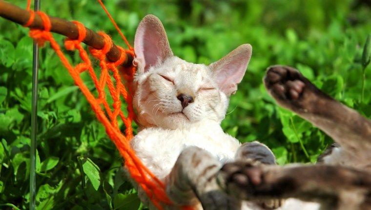 white cat relax on orange hammock