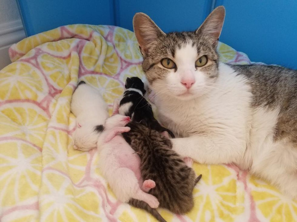 cat and baby kittens