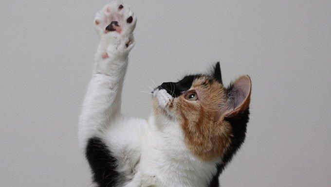 cat reaching paw up