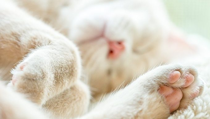cat lying down with paw showing