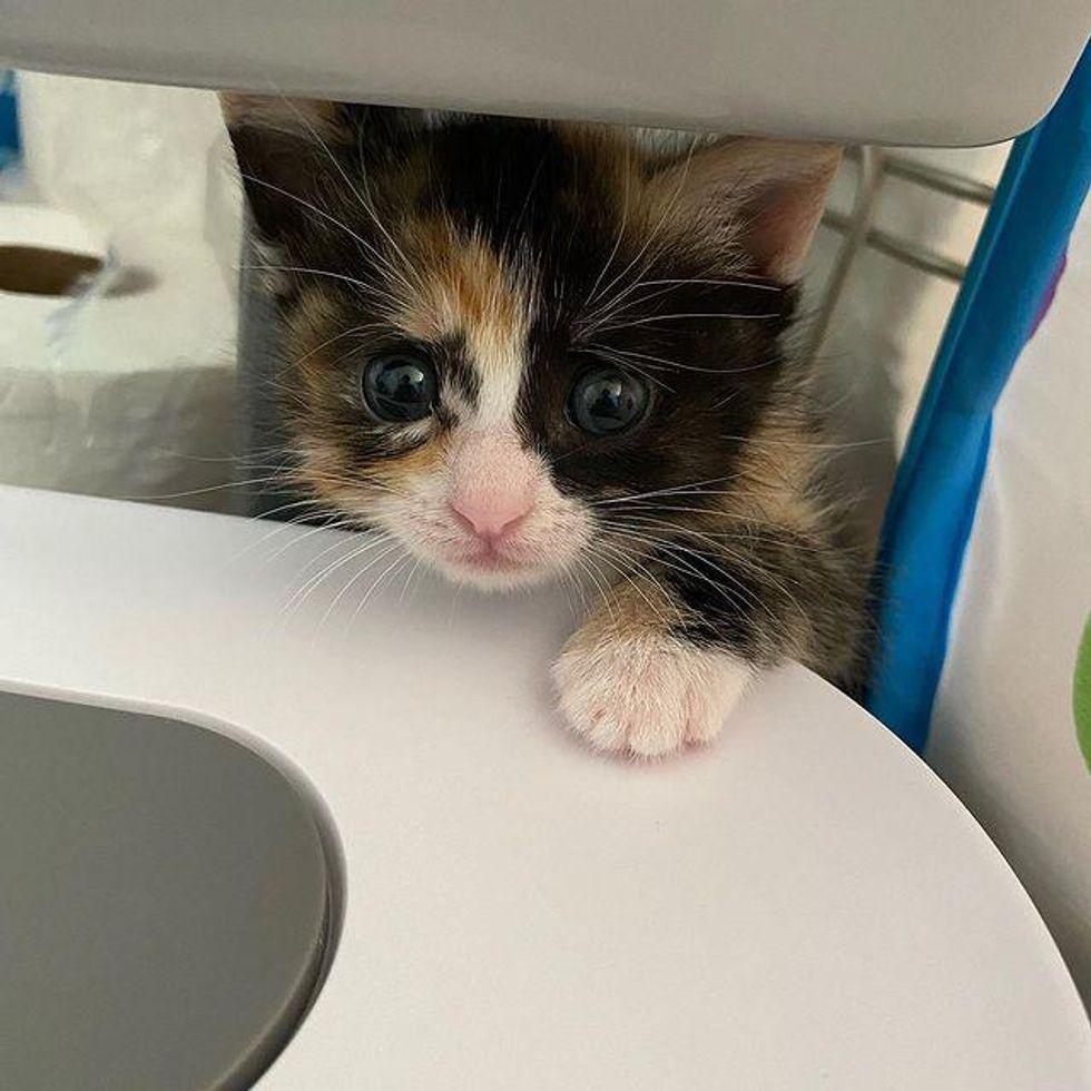 kitten concerned look