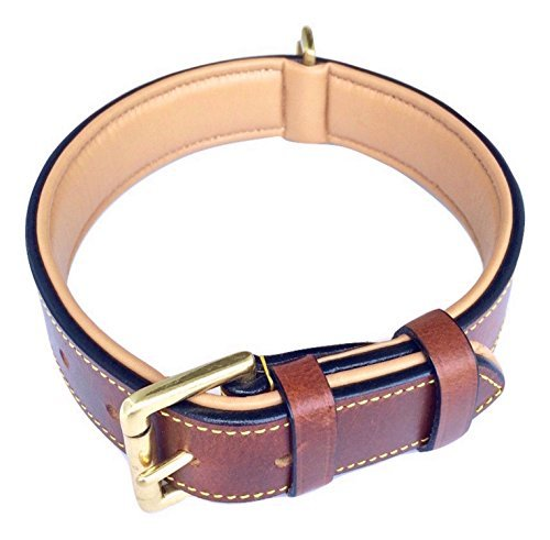 brown leather padded dog collar