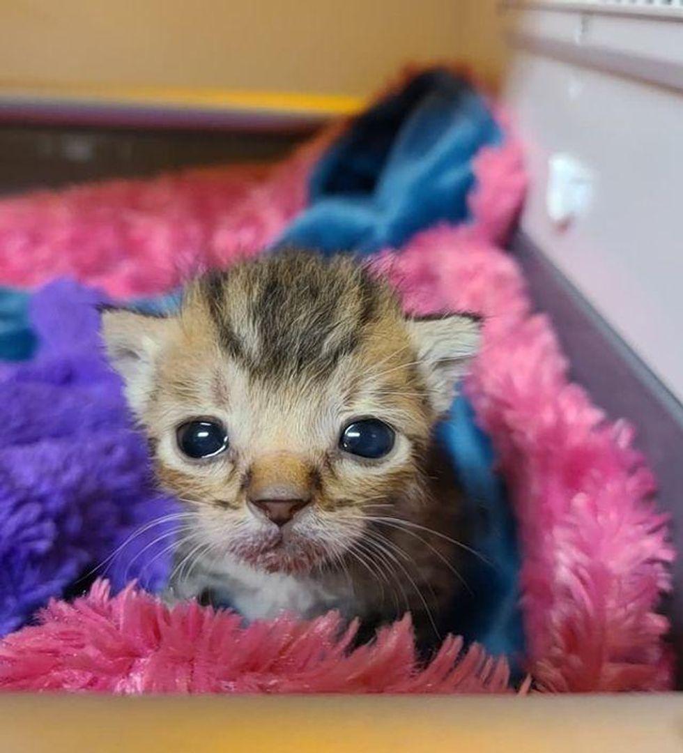 puppy kitten eyes