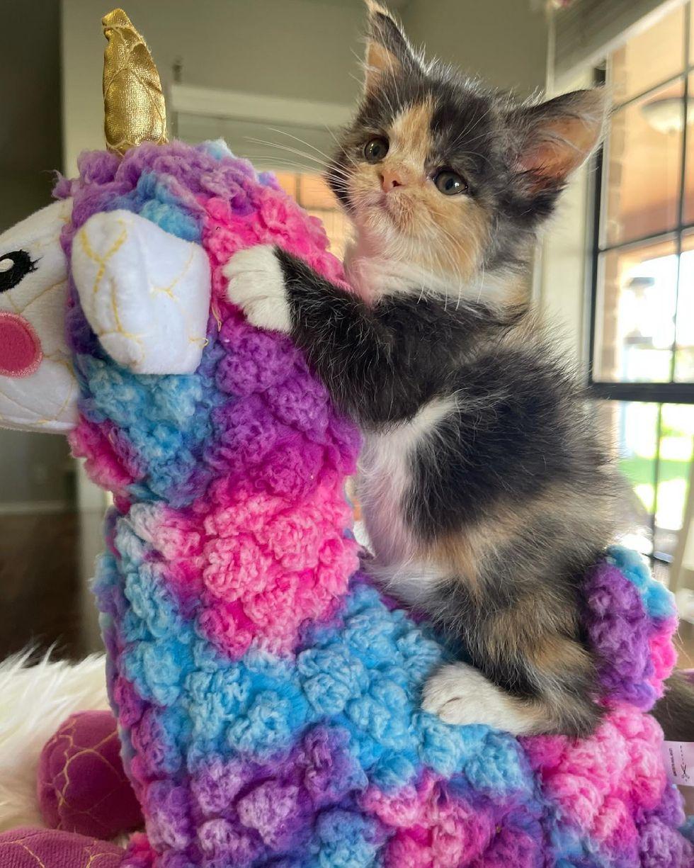 unicorn colorful and kitten