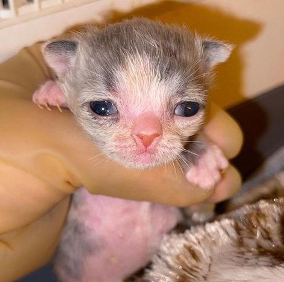preemie kitten
