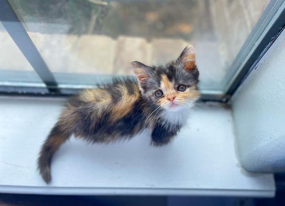 kitten bird tv