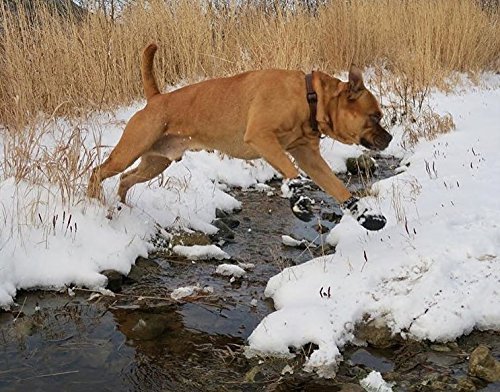 dog jumping across snowy creek in Expawlorer shoes