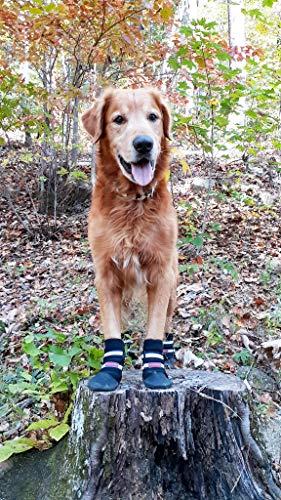 Golden Retriever standing on tree stump wearing black Bark Brite All-Weather Neoprene dog boots on paws
