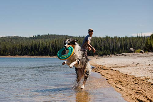 dog in water by beach jumping with teal Ruffwear disc in mouth