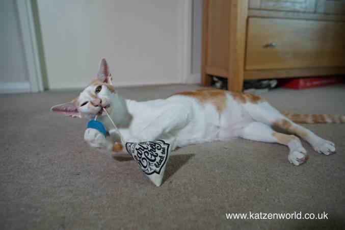 Katzenworld tea toy0022